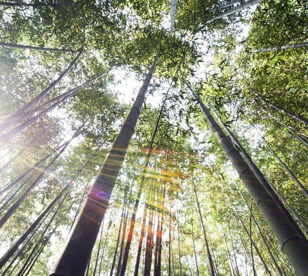 Socken aus Bambus Viskose hergestellt